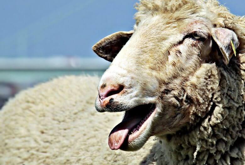 export of livestock from Pakistan